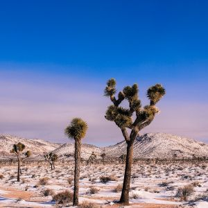 snow in Joshua Tree 2014
